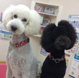 杏仁&リコは見た! マリア動物病院の舞台裏